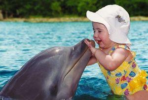 Особенности дельфина