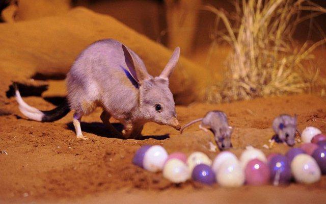 Пасха в Австралии