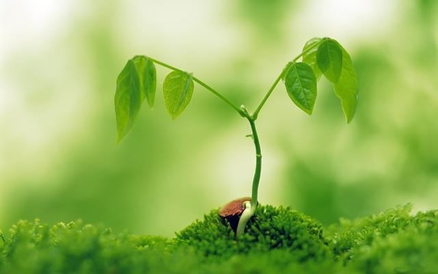 Возрождение природы