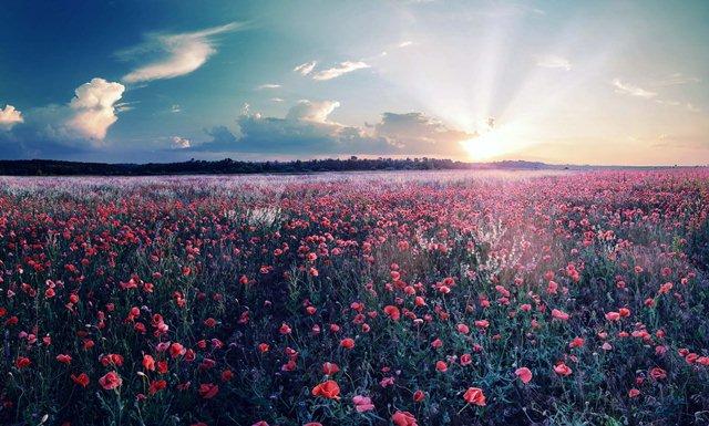 Солнечный восход