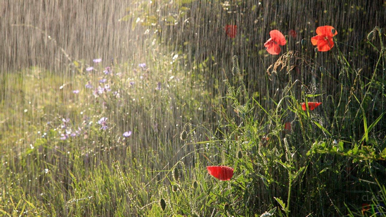 Июнь дождь