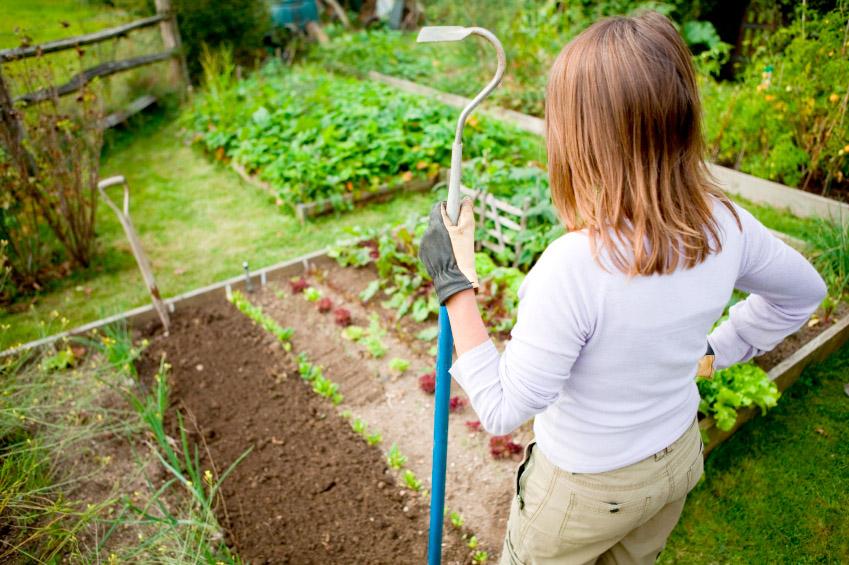 Июнь работы в огороде