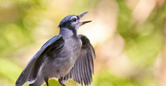Птицы громко поют