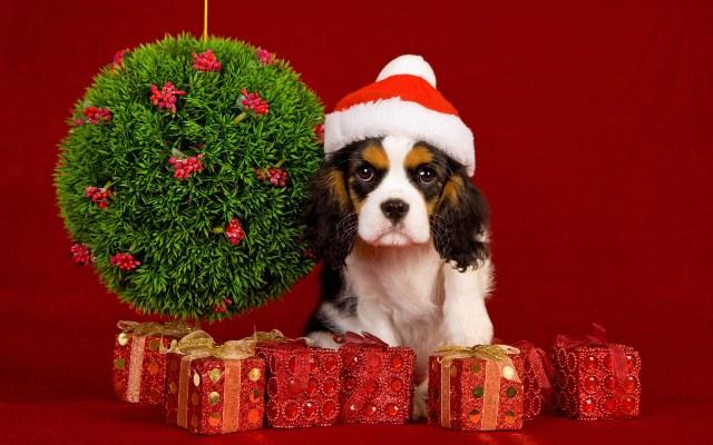 Новый год Собаки