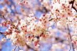Народные приметы про апрель