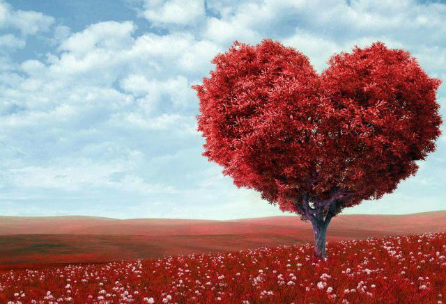 Символ свадьбы - красное дерево
