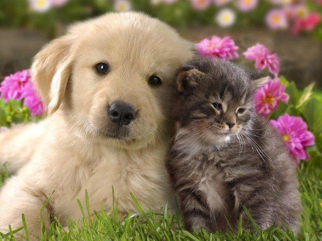 Щенок и котенок подарок