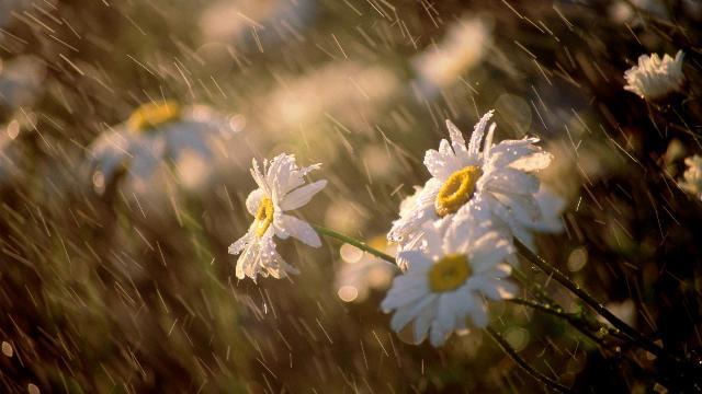 Дождь на Самсона