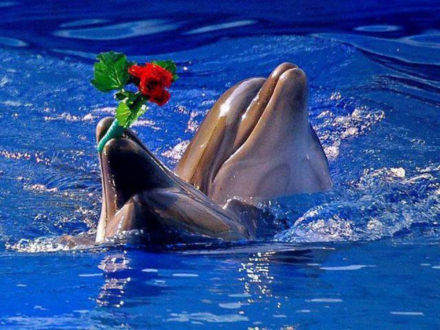 23 июля День китов и дельфинов
