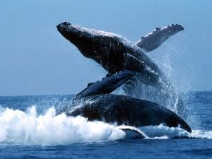 Интересные факты про китов