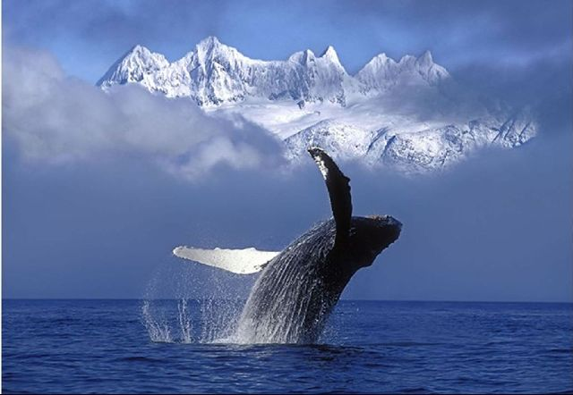 Карликовый кит
