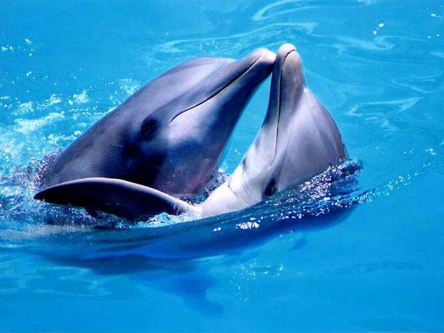 Любовь дельфинов