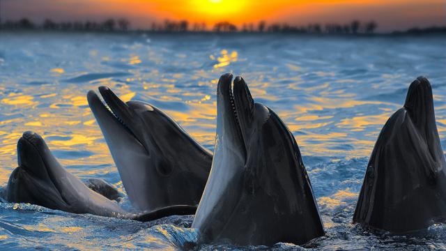 Разговаривает дельфин
