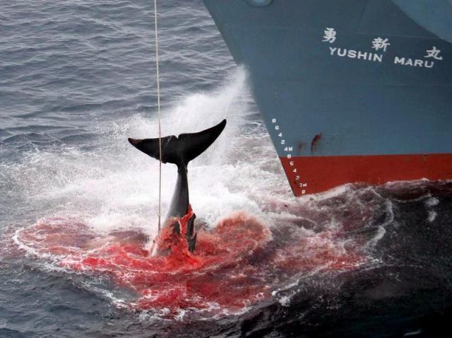 Уничтожение китов