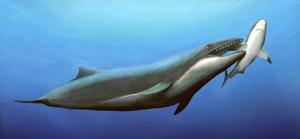 Усатые или зубатые киты