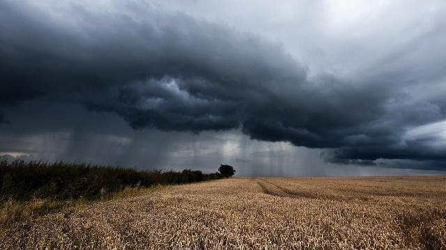 Жатва и дождь