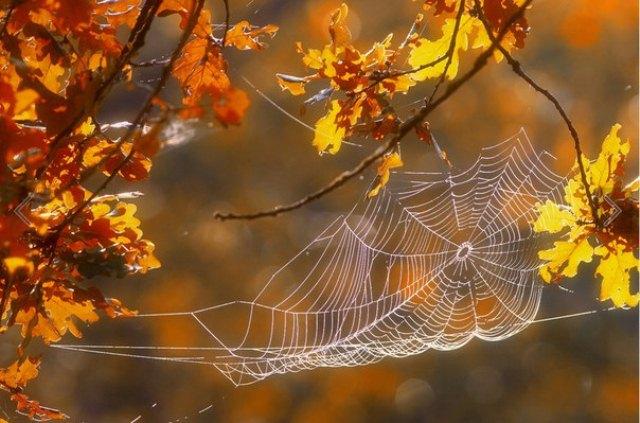 В октябре по наличию паутины всегда говорили о бабьем лете.