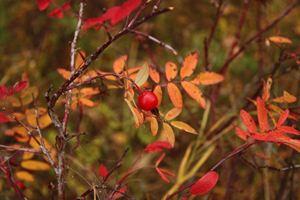 Приметы в октябре о растениях