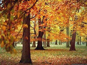 Приметы осени: октябрь, о названии месяца