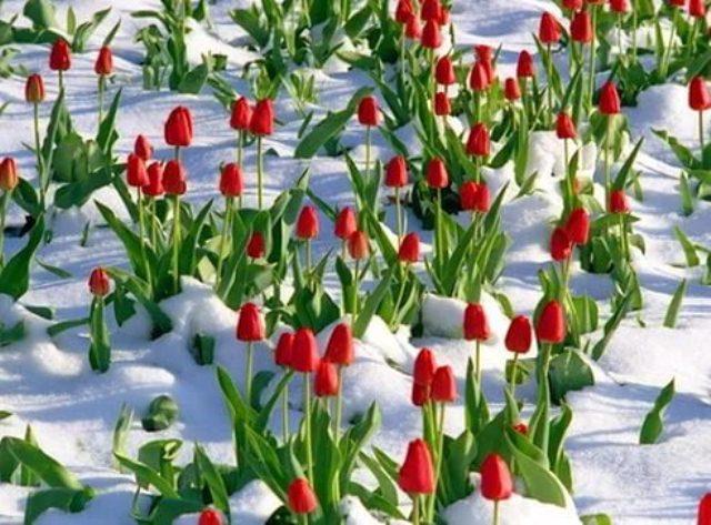 Народные приметы марта