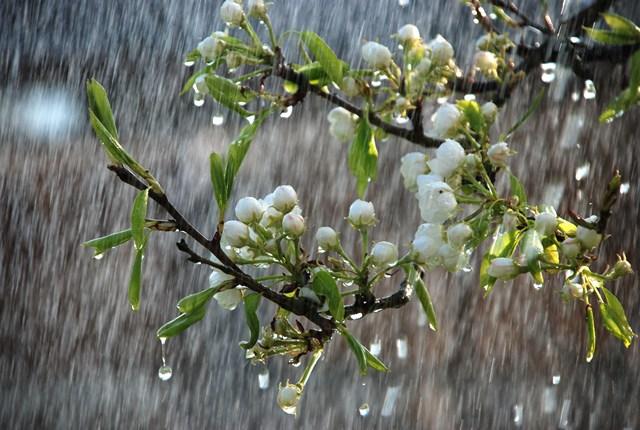 Дождь в мае