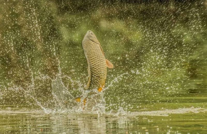 Июнь рыба плещется
