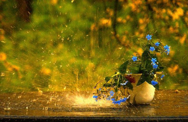 Август дождь
