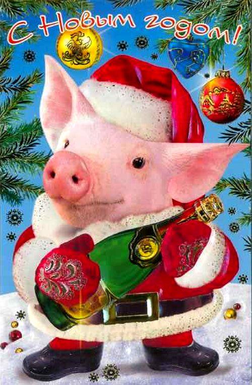 День открытки, картинки с новым годом коллегам год свиньи
