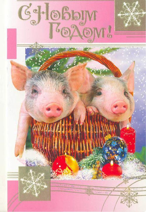 Открытка встречаем год свиньи